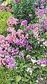 Flower garden, NSW South Coast.jpg