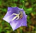 Flower of Bydgoszcz (2).jpg