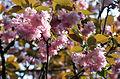 Flowers Canossa.JPG