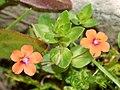 Flowers March 2008-19.jpg