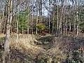 Footpath in Underlaid Wood - geograph.org.uk - 1579384.jpg