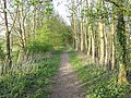 Footpath through Railway Wood - geograph.org.uk - 160856.jpg