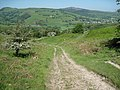 Footpath to the Alyn Valley - geograph.org.uk - 1327864.jpg