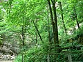 Forêt (Les Planches-près-Arbois) (2).jpg