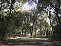 Forest in Chiriku Hachiman Shrine 4.jpg