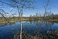 Forest near Olgino 2020-05-08-2.jpg