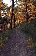 Forest track mount dandenong.jpg