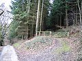 Forestry near Sodom Covert - geograph.org.uk - 346576.jpg