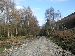 Forestry road, above Abercwmboi - geograph.org.uk - 1203907.jpg