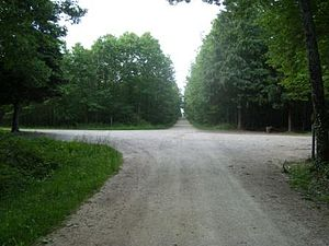 Forest of Tronçais - Typical straight roads through the forest