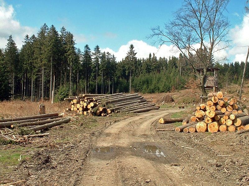 Datei:Forstarbeiten im Harz.jpg