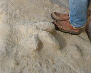 Fossilised dinosaur footprint fairlght cliffs 2007