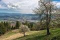 Frauenstein Lorenziberg 1 Obstgarten 21042020 8803.jpg