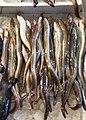Freshwater eels.jpg