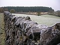 Frosty Wall - geograph.org.uk - 1114353.jpg