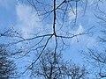 Fruška gora - zimsko nebo u šumi.jpg