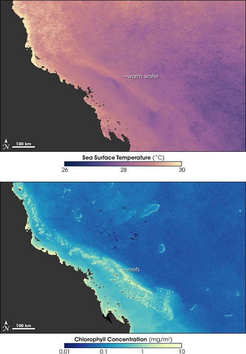 Two images of the Great Barrier Reef showing that the warmest water (top picture) coincides with the coral reefs (lower picture), setting up conditions that can cause coral bleaching GBReef TempChlorophyll 200602.jpg