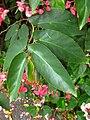Gardenology.org-IMG 2102 rbgs11jan.jpg