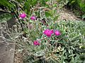 Gardenology.org-IMG 2809 rbgs11jan.jpg