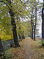 Gdansk 3 Maja jesien.jpg