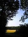 Getreide - panoramio (4).jpg