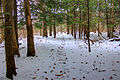 Gfp-wisconsin-madison-snowy-forest-trail.jpg