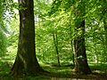 Gießen-Wieseck, Adam und Eva 08.jpg