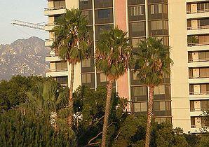Glendalepalmtrees.jpg