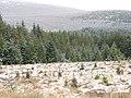 Glenmore Forest - geograph.org.uk - 326178.jpg