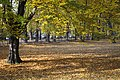 Gliwice - Park Chopina - panoramio (1).jpg