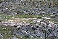 Grønlandshund in Sisimiut (2).JPG