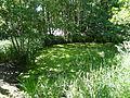Grünes Meer Teich 01.JPG