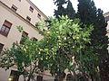 Granada-Colegio Mayor Santo Domingo-Limonero.JPG
