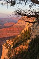 Grand Canyon (Arizona, USA), South Rim nahe Tusayan -- 2012 -- 6079.jpg