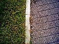 Grass & Walk (228802014).jpg