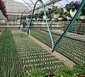 Great Swamp Greenhouse photos coiled watering hose on sliding wire.JPG
