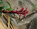Green Leaf, Red Leaf (5801942984).jpg