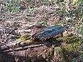 Green oak wood - geograph.org.uk - 1185941.jpg