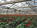 Greenhouse in Armenia 02.jpg