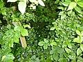 Greenwood forest farming 19.JPG