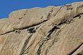 Grupo de cabras montesas en La Pedriza.JPG