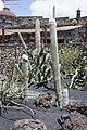 Guatiza - Jardín de Cactus - Lanzarote - J26.jpg