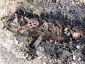 Hénin-Beaumont - Fosse n° 2 - 2 bis des mines de Dourges (03).JPG