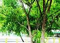 HAZRATH SYED SHAH VALI ULLA DARGAH ( THOPPUR DARGAH ) - panoramio (4).jpg
