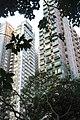 HK 上環 Sheung Wan 永利街休憩花園 Wing Lee Street Rest Garden plant green tree leave October 2017 IX1 雍翠臺 Grandview Garden 聚賢居 CentreStage.jpg