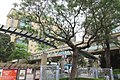 HK CWB Causeway Bay Victoria Park trees view HKCL Hong Kong Central Library 高士威道 Causeway Road footbridge April 2017 IX1.jpg
