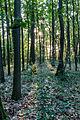 Haltern am See, Wald am Halterner Stausee -- 2014 -- 1151.jpg