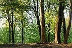 Haltern am See, Westruper Heide -- 2016 -- 2549.jpg