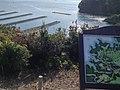 Hamajimacho Hazako, Shima, Mie Prefecture 517-0403, Japan - panoramio (8).jpg