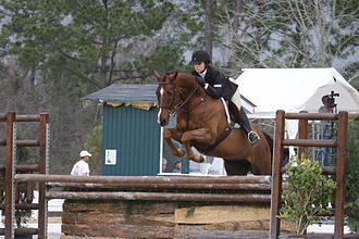 Equitation - A hunter equitation rider jumping her course.